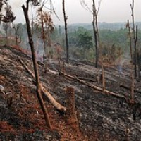 Tribal Districts Show Heavy Forest Degradation