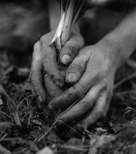 Cultivatring Food Justice